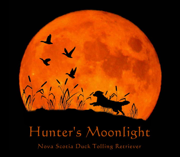 Hunter's Moonlight betreten